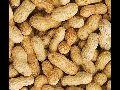 Natural Shelled Peanuts