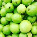 Aseptic White Guava Pulp