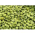 Green Coffee - Arabica Beans ( Washed )
