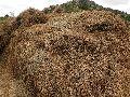 Organic Dried Bhringraj Leaves