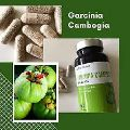 Garcinia Cambogia Pcos