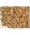 Premium Quality Neem Seeds