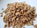 Stramonium Seeds