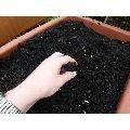 Premium Vermicompost Fertilizer