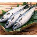 Fresh Vanjaram Fish
