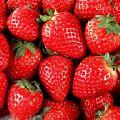 Fresh Sweet Strawberry