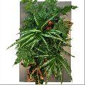 Indoor Garden Plant