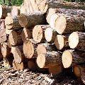 Brown Timber Logs