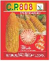 C.P. 808 Hybrid Maize Seeds