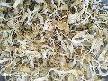 Yellow Dry Oyster Mushroom