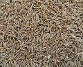 10.Cumin seeds