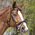 Bridle with Chain Clincher
