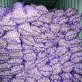 Garlic Seeds 03