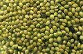 Green Coriander Seeds