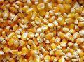 Corn Animal Feed