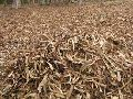 Agriculture Waste