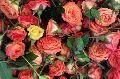 Button Rose Flower
