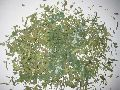ARTEMISIA DRACUNCULUS (tarragon leaves)
