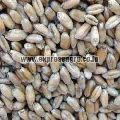 Animal Feed Wheat Seeds
