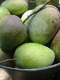 Suvarnarekha Mango