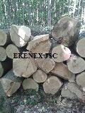 Read Oak Logs from Ukraine (quercus Rubra)