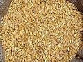 Mill Quality Wheat Seeds