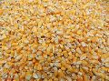 Yellow Maize Seed Exporter India