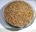 Cassia Tora Seed
