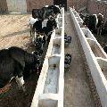 Cattle Feed Grade Soya Lecithin