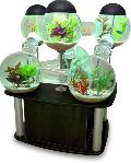 Fountain Fish Aquariums