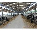 Prefab Dairy Farm Shed