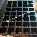 Sugarcane Seedling Trays