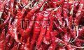334 Red Chilli