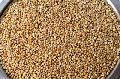 Sorghum Seeds(Jowar)