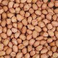 Skinned Peanuts