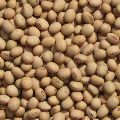Organic Soybean for Sale