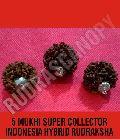 5 Mukhi Super Collector Indonesia Hybrid Rudraksha