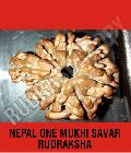 One Mukhi Savar Nepal Rudraksha Beads