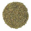 Hybrid Millet Seeds