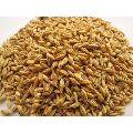 Natural Barley Grains