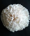 Sola Flower