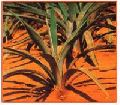 Agave Americana Plant