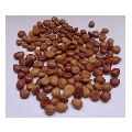 Bridelia Retusa Seeds