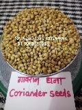 Indian Coriander Seeds