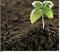 Somplus Agromine Organic Fertilizer