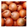samber onion 5 to 25 mm