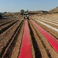 Red Mulch Film