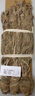Dried Raw Tobacco