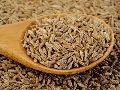 Cumin Seeds Exporter in india - Alram Exports