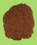 Methi (fengureek Seed)